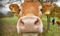 животноводство в брединском районе
